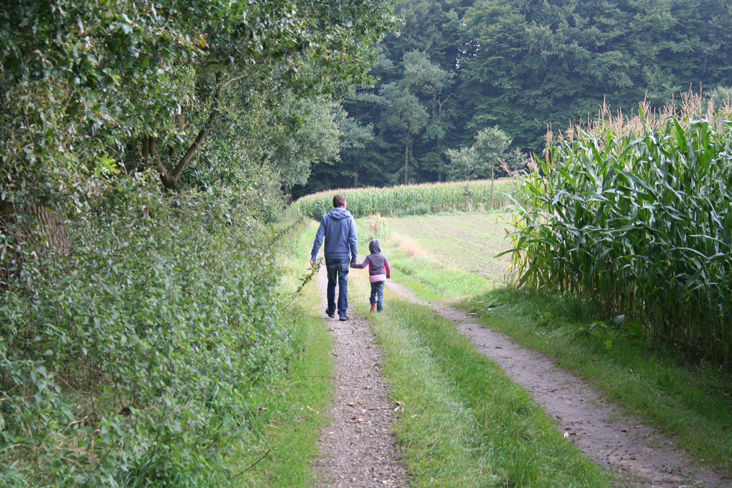 Father and daughter walking alongside a corn field