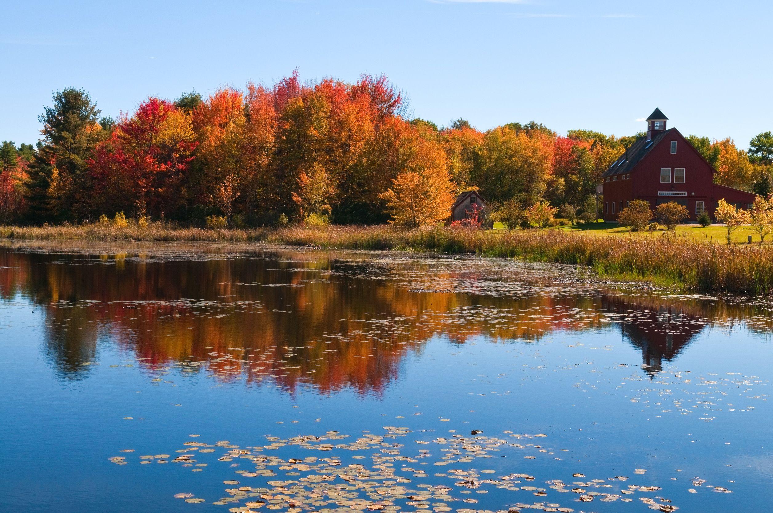 Fall foliage near a pond in Dunbarton, New Hampshire